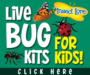 #MomStorm – Buggy Fun with Insect Lore