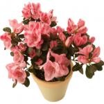 FlowersInPot