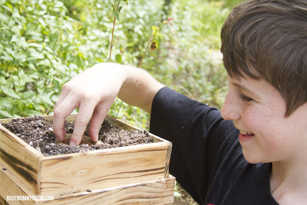 How to Plant a Salsa Garden with Kids