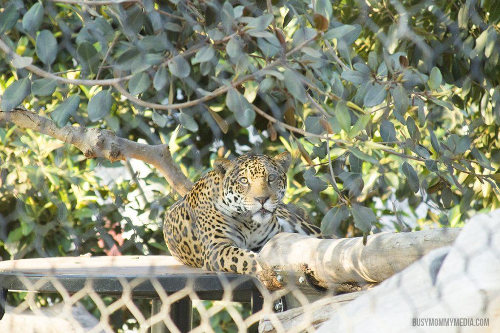 San Diego Zoo sleepover