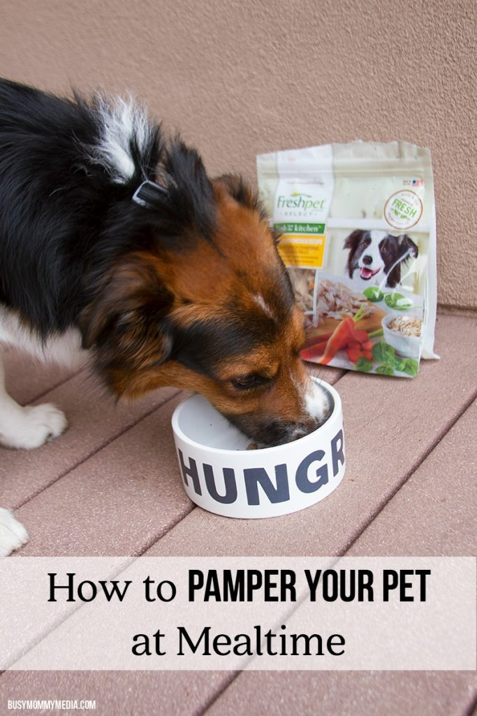 How to Pamper your Pet at Mealtime