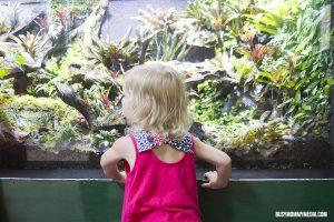 A Visit to The Loveland Living Planet Aquarium
