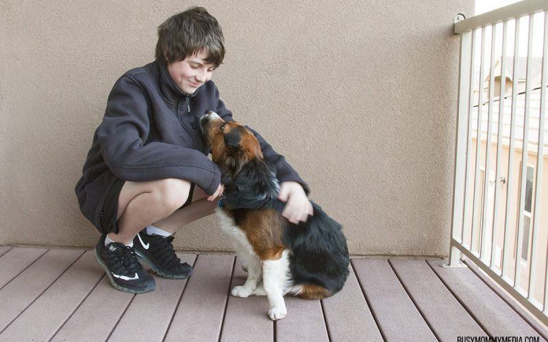 How to Detox Your Pet's Diet