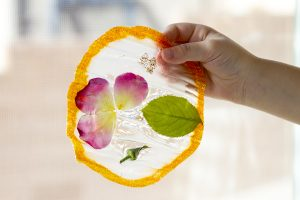 STEM Activity – Life Cycle Glue Suncatchers