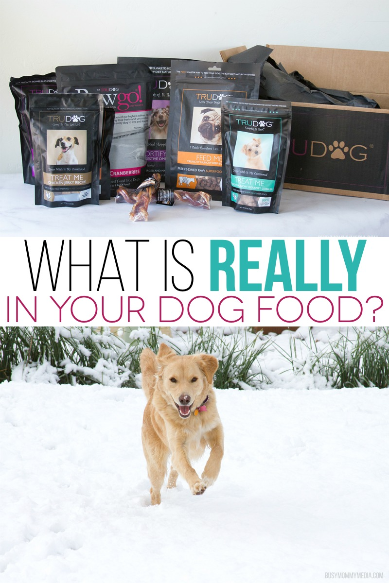What is REALLY in your Dog Food? | An in-depth look at what is really in commercial dog food and a better options for pet owners who want to serve their dogs exactly what their bodies need.